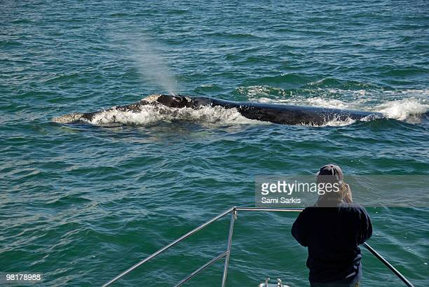 Photographer on whale watching boat