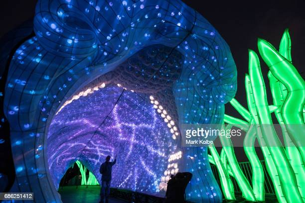 A photographer poses inside PJ the 20 metre walkthrough Port Jackson Shark installation one of the giant illuminated animal sculptures on display at...