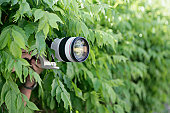 Photographer with long lens taking photographs from bushes