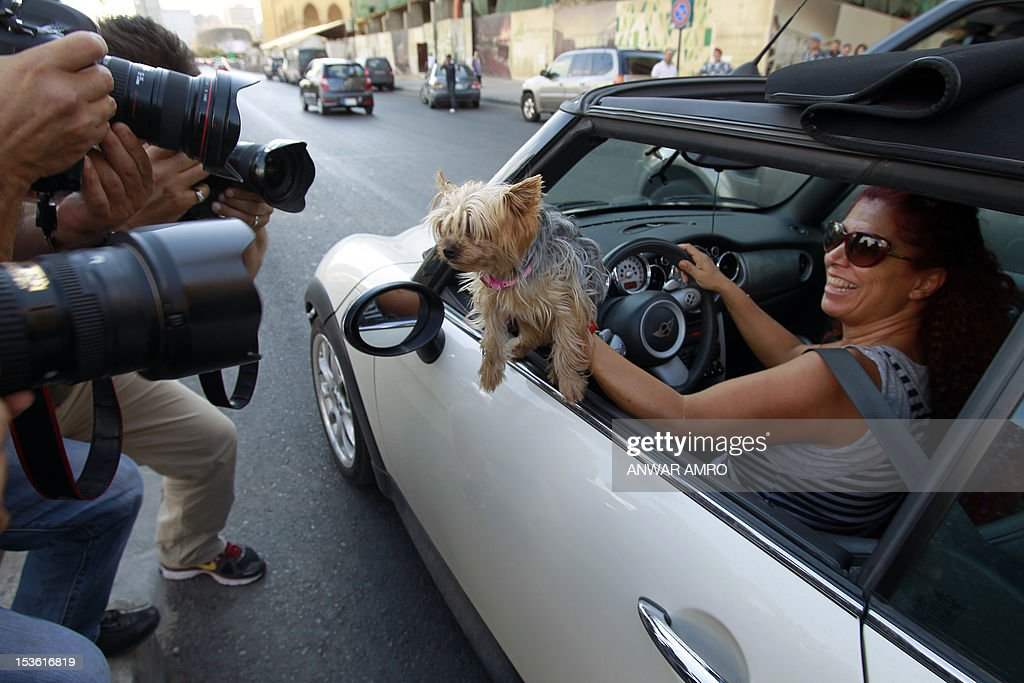 Photographers take pictures of a Lebanese member of Beirut for the Ethical Treatment of Animals (BETA) charitable organisation, showing her pet dog in her car during a demonstrates in Beirut on October 7, 2012, calling to stop the abuse against animals and demanding the Lebanese authorities to guarantee the ethical treatment. AFP PHOTO/ANWAR AMRO