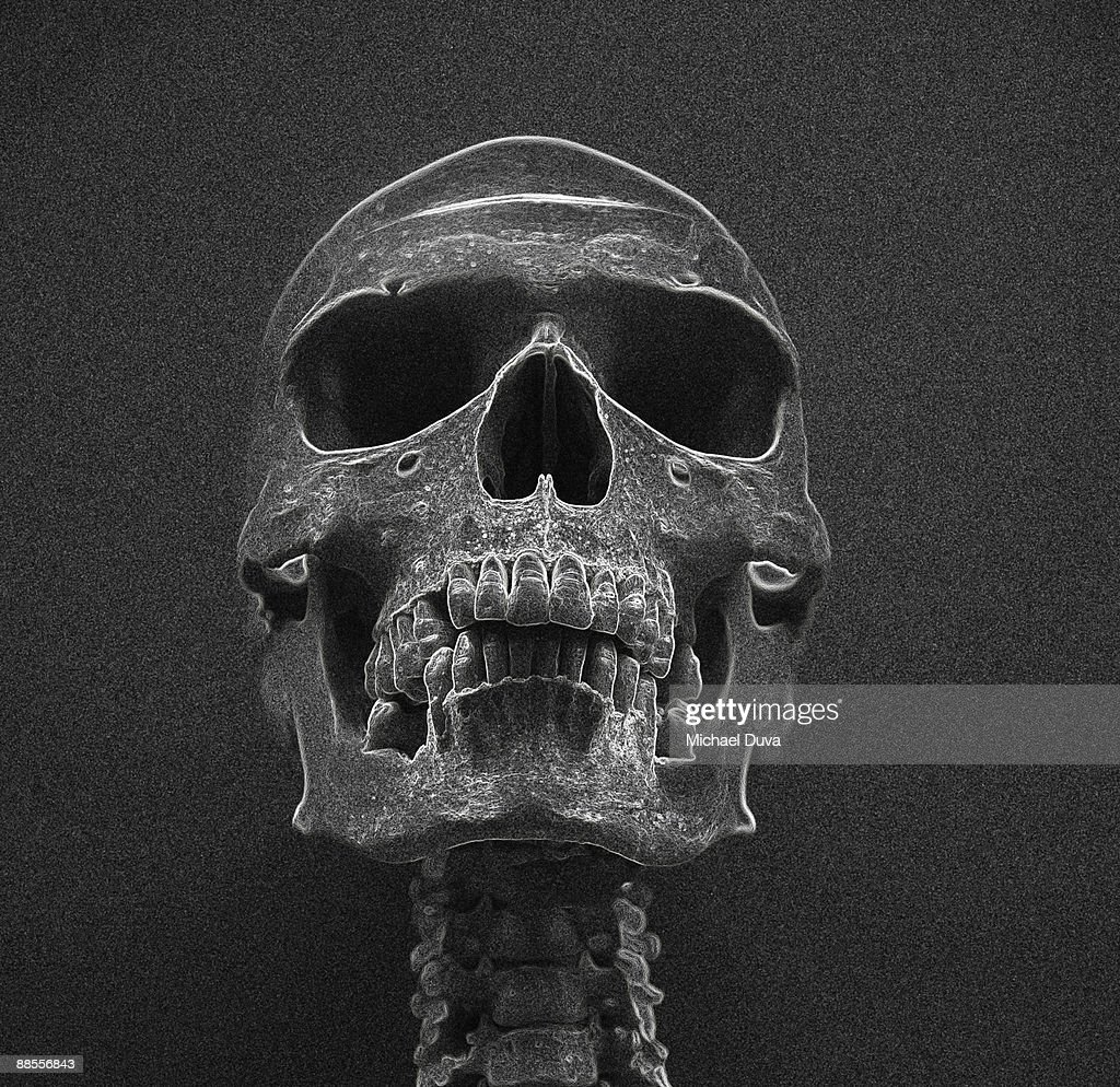 photographic line drawing of a skeleton : Stock Photo