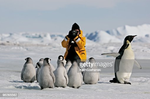 Photographing Emperor Penguins
