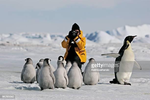 Fotografiando pingüinos emperados