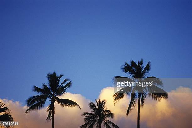 Photography of palm trees, Low Angle View