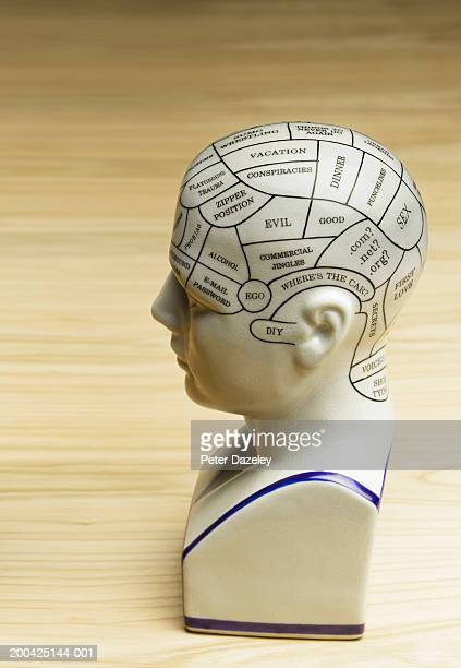 Phrenology head with male humorous concepts, side view