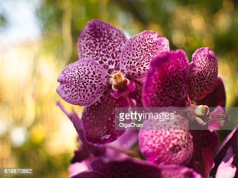 Phuket Botanic Garden : Stock Photo