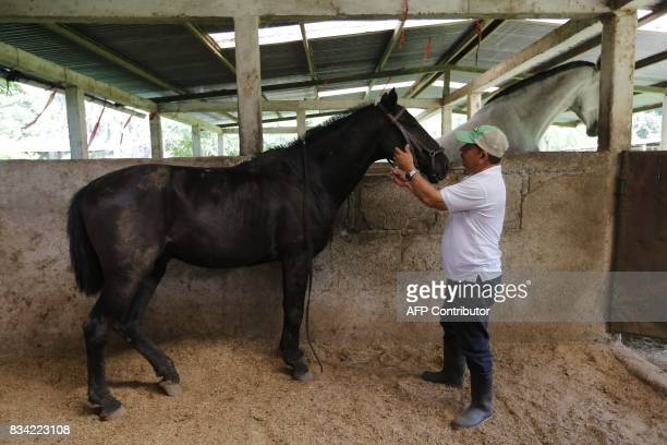 Physiotherapist Gustavo Vallejo prepares the horse for a hippotherapy session with children in Matagalpa town some 130 kilometres from Managua on...