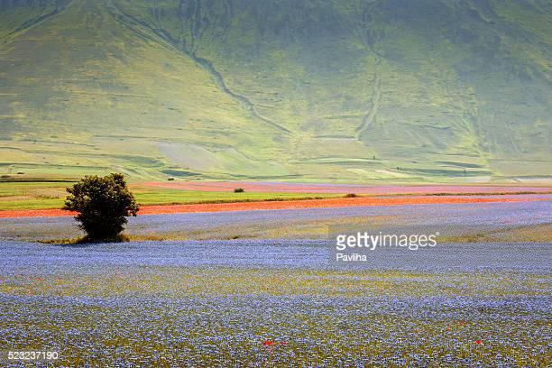Piano Grande di Castelluccio di Norcia, villaggio su una verde collina, Italia