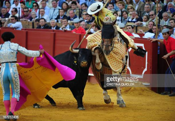 A picador performs a pass on a bull during a bullfight at the Maestranza bullring in Sevilla on April 19 2013 AFP PHOTO/ CRISTINA QUICLER