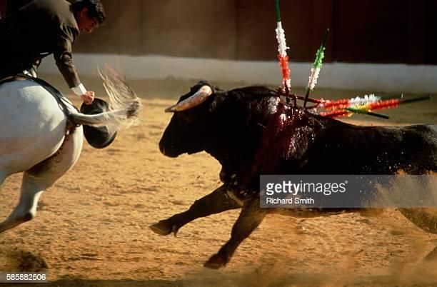 Picador Taunting Bull