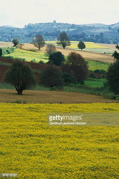Picardy, France, landscape with fields of crops and rolling hills