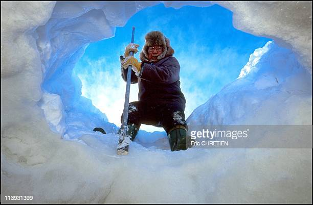Pick Of The Mold In Ice Wakeham Bay Nunavik Canada In Nunavik Canada In 2000Urpignak an Inuk from Kangiqsujuaq Expanded with his ice pick a crack to...