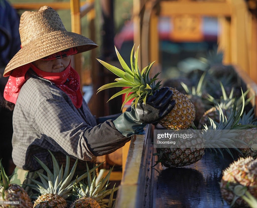 A picker loads fruit onto a conveyor at the Dole Food Company Inc. plantation in Wahiawa, Hawaii, U.S., on Thursday, Jan. 17, 2013. Dole Food Company Inc. has evolved from a Hawaiian pineapple purveyor into the world's largest producer of fresh fruit and vegetables. Photographer: Tim Rue/Bloomberg via Getty Images