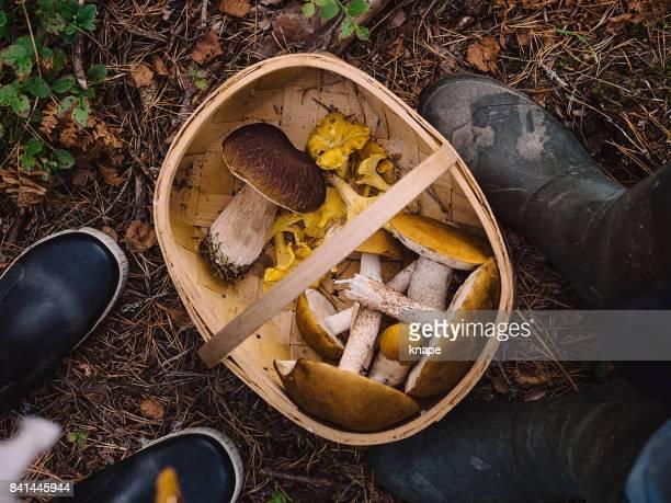 Choix de champignons dans les bois