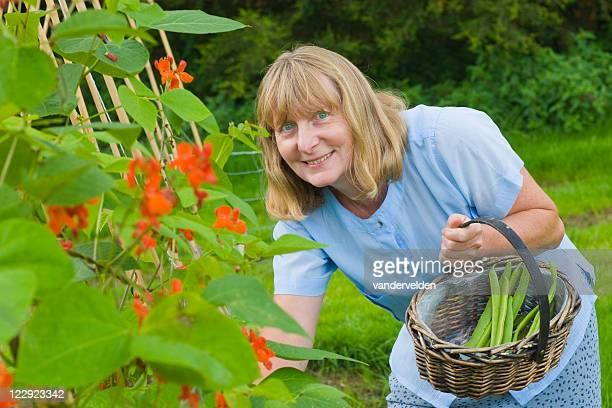Picking Runner Beans Series