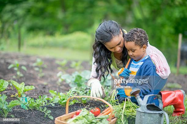Escolher produtos hortícolas no jardim