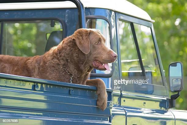 Pick-up Pup
