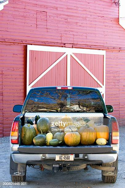 Pick-up truck full of pumpkins, squash and gourds, rear view