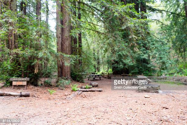 Picnic area among mature coast redwood trees in the Old Church grove in Redwoods Regional Park Oakland California May 26 2017