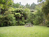 Picnic table in grass area by the tropical rainforest in Auckland, New Zealand