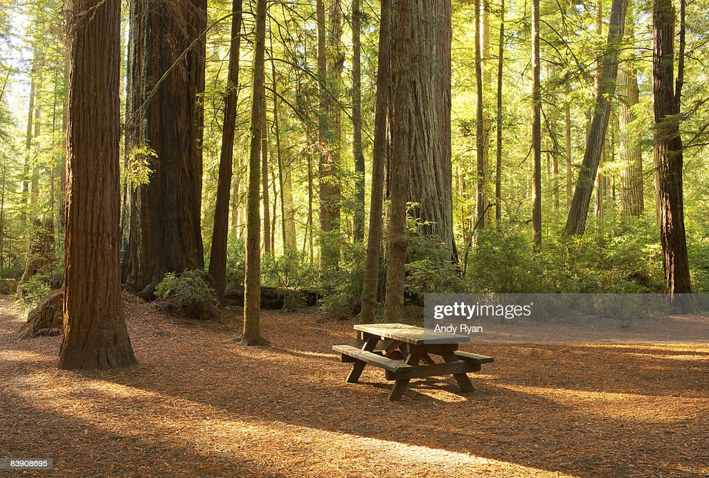 Picnic Table in Campground, Redwood National Park : Stock Photo