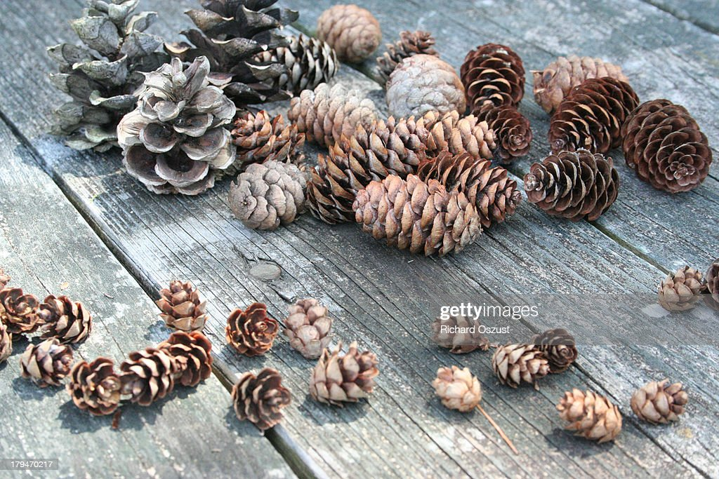 Picnic Table With Pine Cones And Hemlocks Stock Photo Getty Images - Spruce picnic table