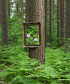 Picture frame on tree in forest (digital composite)