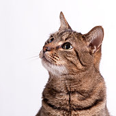 A picture of a cat on a white background looking up