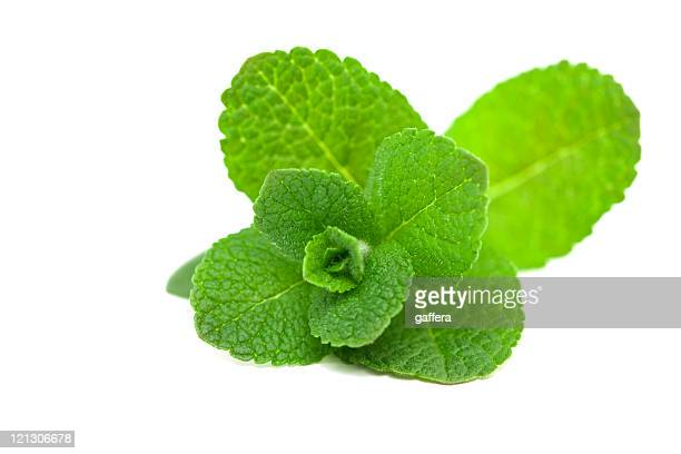 A picture of a green leaf mint