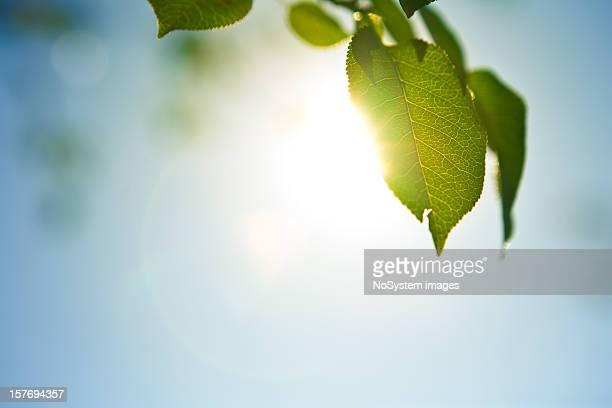 Morgen Blätter