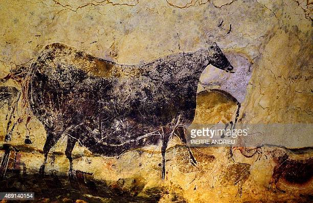 Picture of a painted bull of the 'main gallery' taken during a visit of the Lascaux Cave on July 25 2008 near the village of Montignac south Western...
