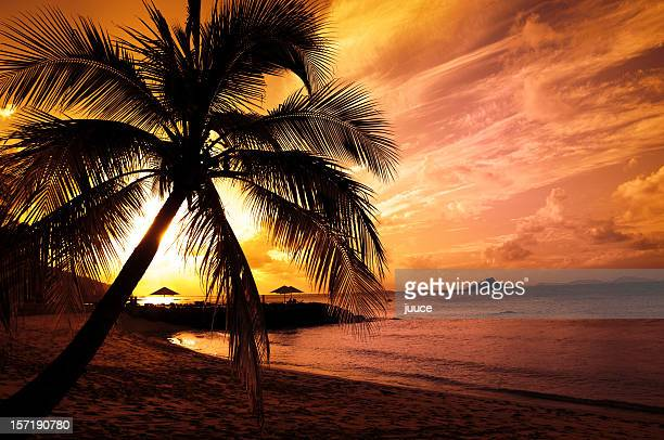 Picture of a palm tree on the beach at sunset