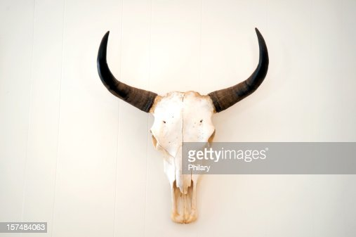 A picture of an animal skull on a white background
