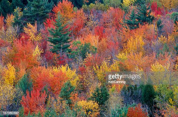 Picture of Autumn foliage with beautiful colors