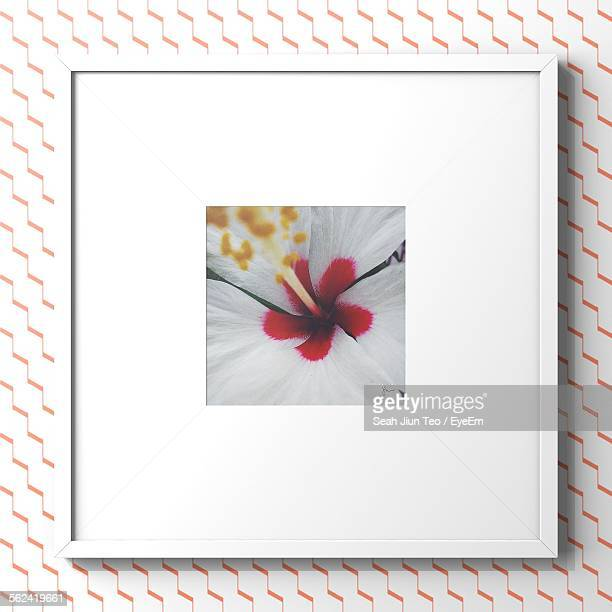 Picture Of Flower In Frame