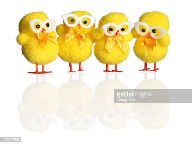 A picture of four yellow chicks