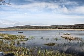 A picture of Leighton Moss Nature Reserve