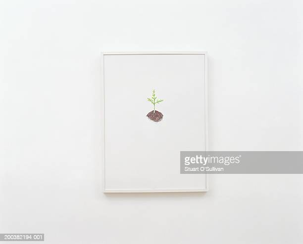 Picture of plant mounted on white wall
