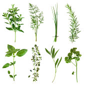Herbs collection, isolated on white.  Includes oregano, dill, chives, rosemary, basil, thyme, sage and curly parsley.  More herbs and spices:   http://robynm.smugmug.com/photos/265712091_f6Mdn-L.jpg