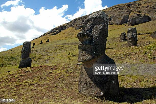 Picture of some of the 390 abandoned huge statues in the hillside of the Rano Raraku volcano in Easter Island 3700 km off the coast of Chile 12...
