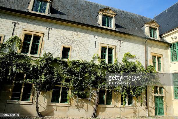 A picture shows a 300yearold grapevine of verjus grapes on the former Jesuit secondary school in Reims eastern France on September 21 2017 The verjus...