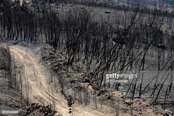 Picture shows a burnt area following a wildfire in Vilardevos northwestern Spain on August 4 2017 / AFP PHOTO / MIGUEL RIOPA