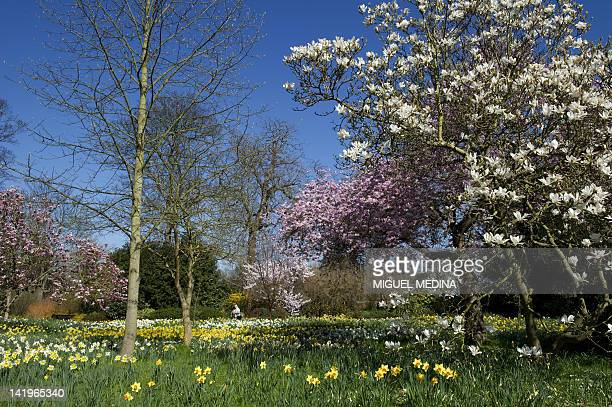 A picture shows a general view of the Wilderness garden at the Hampton Court Palace in East Molesey south west London on March 27 2012 AFP PHOTO/...
