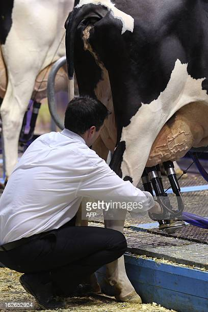 A picture shows a man milking a cow at the International Agriculture Fair of Paris at the Porte de Versailles exhibition center on February 25 2013...