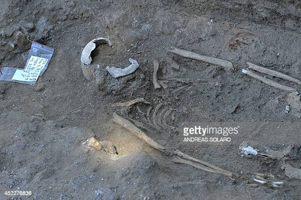 A picture shows a skeleton at the Parco dei Ravennati excavation site in Ostia Antica on July 17 2014 near Rome The American Institute for Roman...