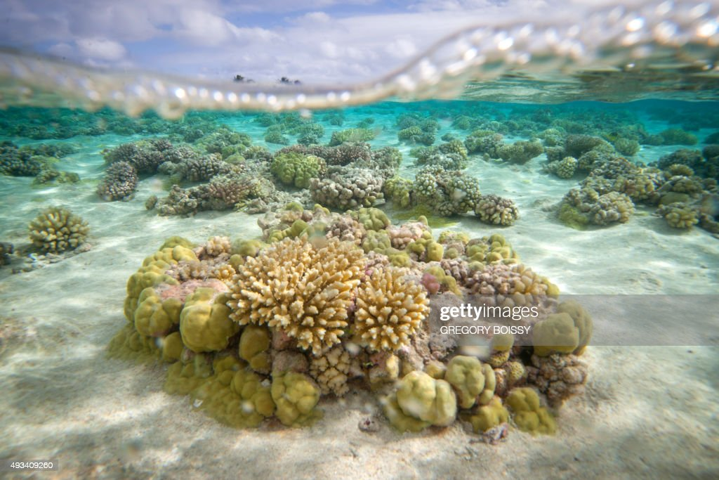 A picture shows coral reefs in the lagoon of the Toau atoll about 400 kilometres from Tahiti in the Tuamotu Archipelago in the French polynesia on...