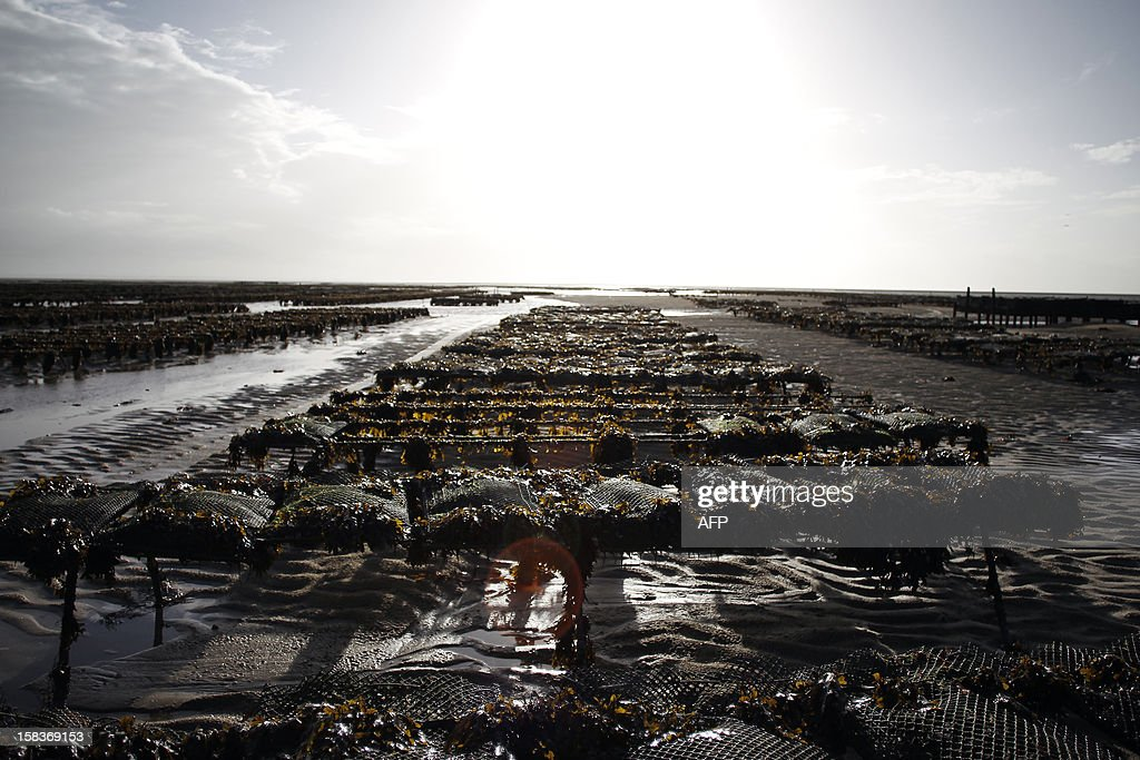 A picture shows oyster beds on December 14, 2012, in Agon-Coutainville, northwestern France. AFP PHOTO/CHARLY TRIBALLEAU