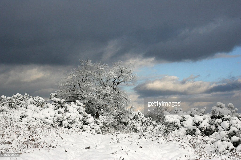A picture shows snow clinging to trees in Sleights, near Whitby, north east England, on January 15, 2013. Heavy snowfall has hit parts of central and north east England, bringing sub-zero temperatures and travel disruption across the country.