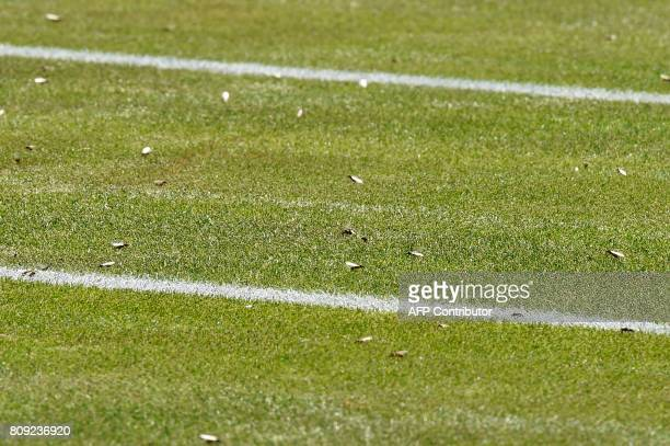 A picture shows the court covered in flying ants as Ukraine's Sergiy Stakhovsky plays against Japan's Kei Nishikori during their men's singles second...