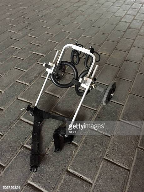 Picture shows the purposemade wheels of a dog who suffers spinal disc herniation on January 6 2016 in Hangzhou Zhejiang Province of China The host...